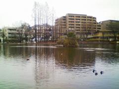 冬枯れの見次公園と鴨